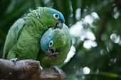stock photo of parrots  - parrot bird sitting on the perch - JPG