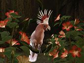 stock photo of palm cockatoo  - 3d - JPG