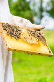 stock photo of beehive  - Beekeeper controlling beehive and comb frame  - JPG