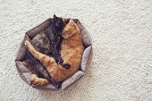 stock photo of sleep  - Couple cats sleep and hugging in their soft cozy bed on a floor carpet - JPG