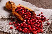foto of peppercorns  - Red peppercorns in wooden scoop on burlap - JPG
