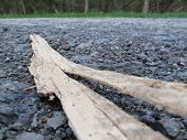 foto of wood pieces  - a piece of wood lying on the road suitable as abstract or background - JPG