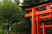 image of inari  - Torii gates at Fushimi Inari - JPG