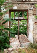 picture of abandoned house  - European abandoned house from brick closeup was overgrown with bushes and trees - JPG