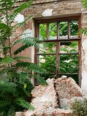 pic of abandoned house  - European abandoned house from brick closeup was overgrown with bushes and trees - JPG