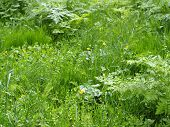 picture of tall grass  - Green fields and tall grass in the park with soft focus - JPG