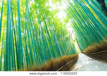 Bamboo Grove Forest Light Rays Trees Tilted