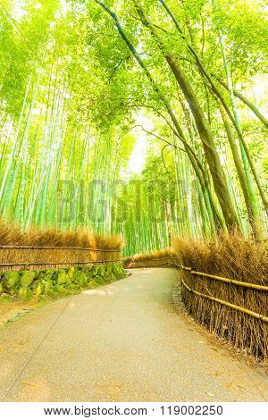 Arashiyama Bamboo Forest Twisting Road Nobody V
