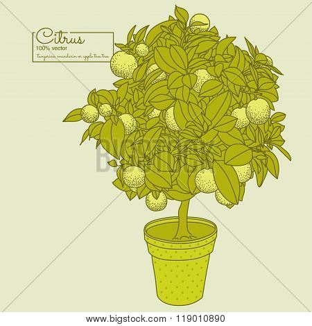 Drawing Of A Small Citrus Tangerine, Orange Or Lemon Tree