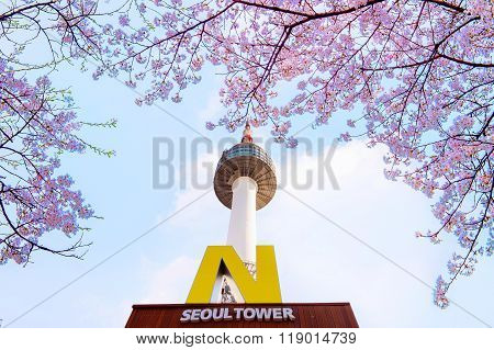 N Seoul Tower  And Cherry Blossom In Spring.