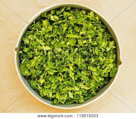 Freshly chopped fenugreek leaves kept in a vessel on a plain background