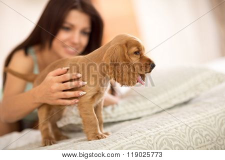 Adorable puppy cocker Spaniel stands on big comfortable bed