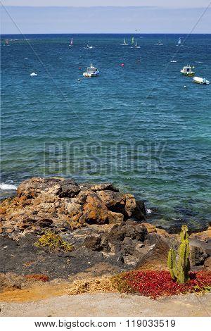 Surf Cactus Coastline Lanzarote  In Spain