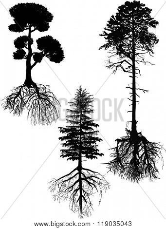 illustration with three pine tree silhouettes isolated on white background