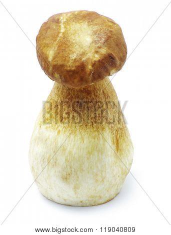Boletus edulis mushroom isolated on white background