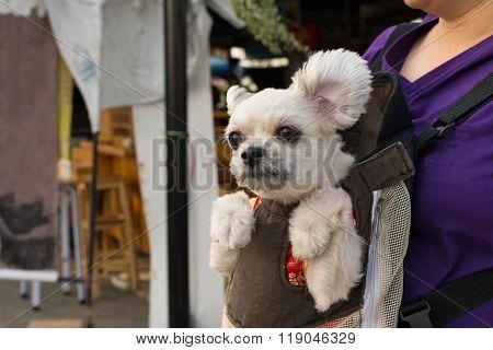 Dog Stay In Knapsack