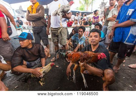 UBUD, BALI / INDONESIA - FEB 22, 2016: Unidentified local people during Balinese traditional cockfighting competition. Cockfighting is now illegal throughout in the US, Brazil, Australia and Europe.
