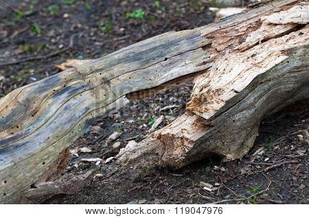 Cracked Log