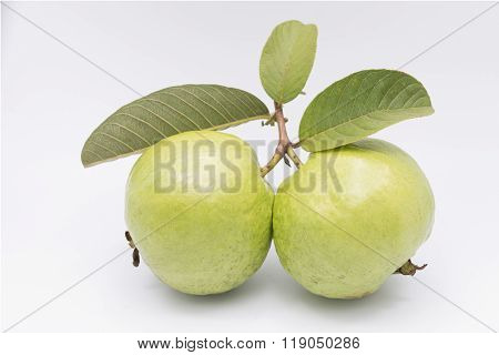FResh Guavas with leaves on white background