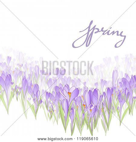 Vector card Hello Spring. Floral frame with crocuses and  snowdrops. Purple background