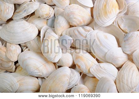 Background from sea cockleshells