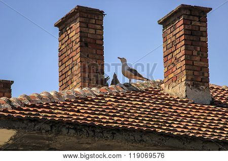 Seagulls on the roof of the family