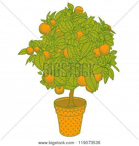 Citrus Tangerine, Orange Or Lemon Citrus Tree