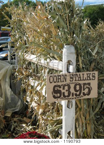 Corn Stalks For Sale