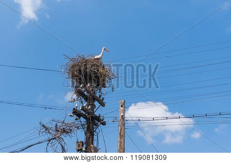 White stork nest on an old electricity pole in Ukraune