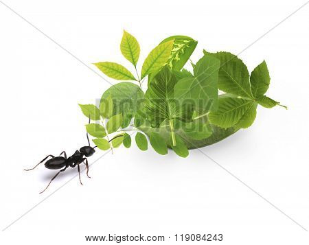Small ant and green leaves, isolated on white.