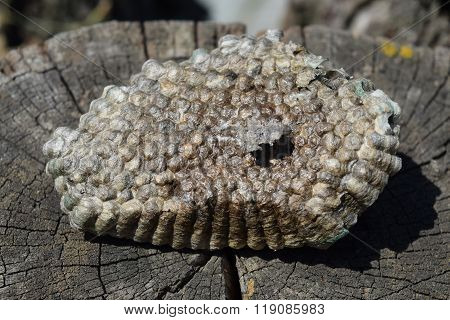 Hornet's Nest, Bottom View