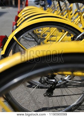 Bicycles In The Store Of The Urban Bike-sharing To Move Into Ecologically City