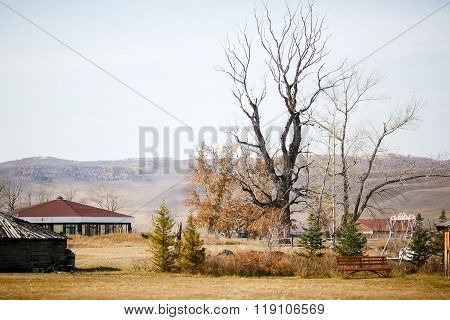 Giant ancient tree withered and black in middle of autumn landscape. Mystery.