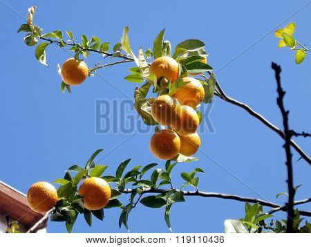Or Yehuda Orange Branch  2007