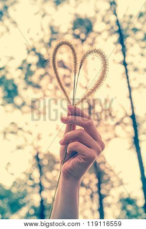 Human Hand Holding Heart-shape Grass Flower. Love Concept.