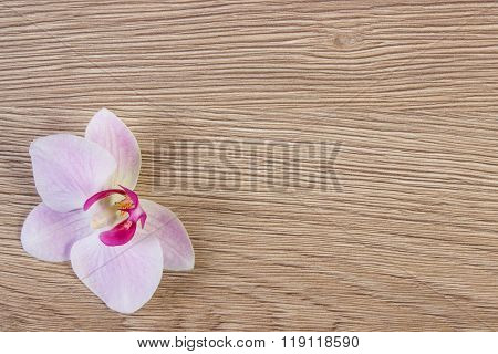 Blooming Fragrant Orchid Flower, Copy Space For Text