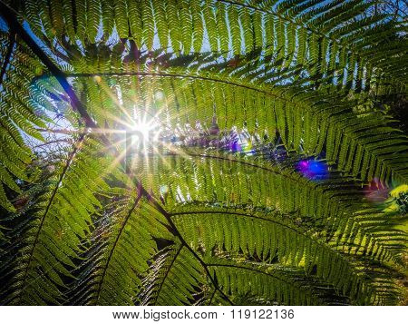Fern leaf and sunrays