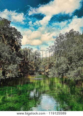 Cypress Trees Reflecting Into The Waters Of Blue Spring State Park In Florida
