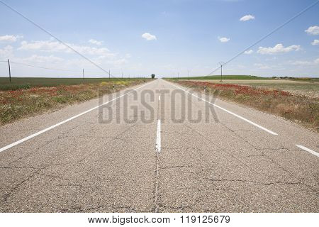 Straight Road Between Red Flowers