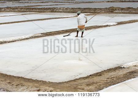 Agriculturist is harvesting salt farm, Pondicherry arera