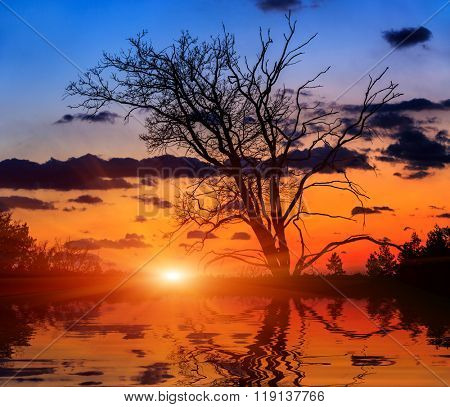 leafless oak tree on sunset background with water reflection