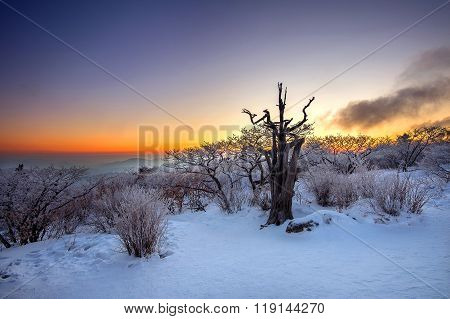 Silhouette Of Dead Trees, Beautiful Landscape At Sunrise On Deogyusan National Park In Winter,south