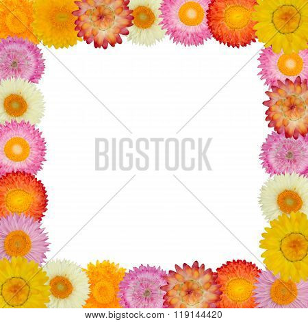Straw Flower frame Isolated On Background