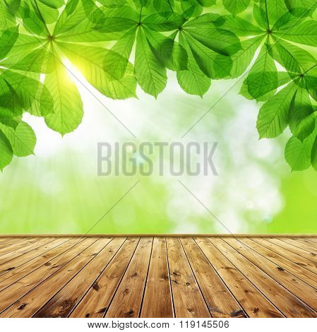 Spring leaves of chestnut tree (Aesculus hippocastanum)  with wooden board.
