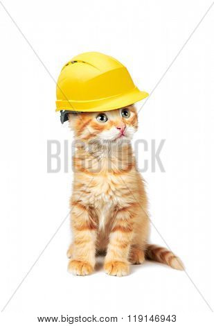 Red cat with helmet, isolated on white background