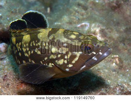 Grouper5