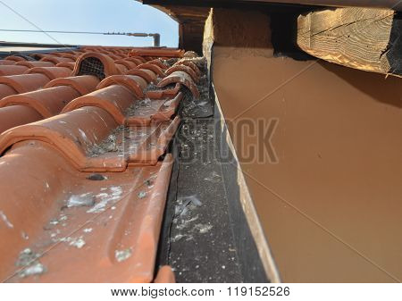 Pigeon Damages On Roof
