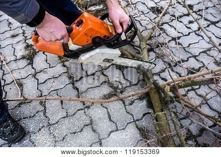 Sawing Branches