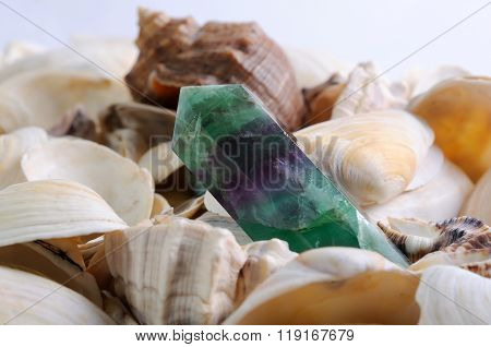 Sea cockleshells background with nephrite crystal