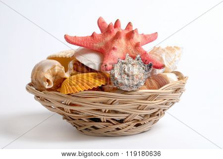 Sea cockleshells and starfish in wattled basket